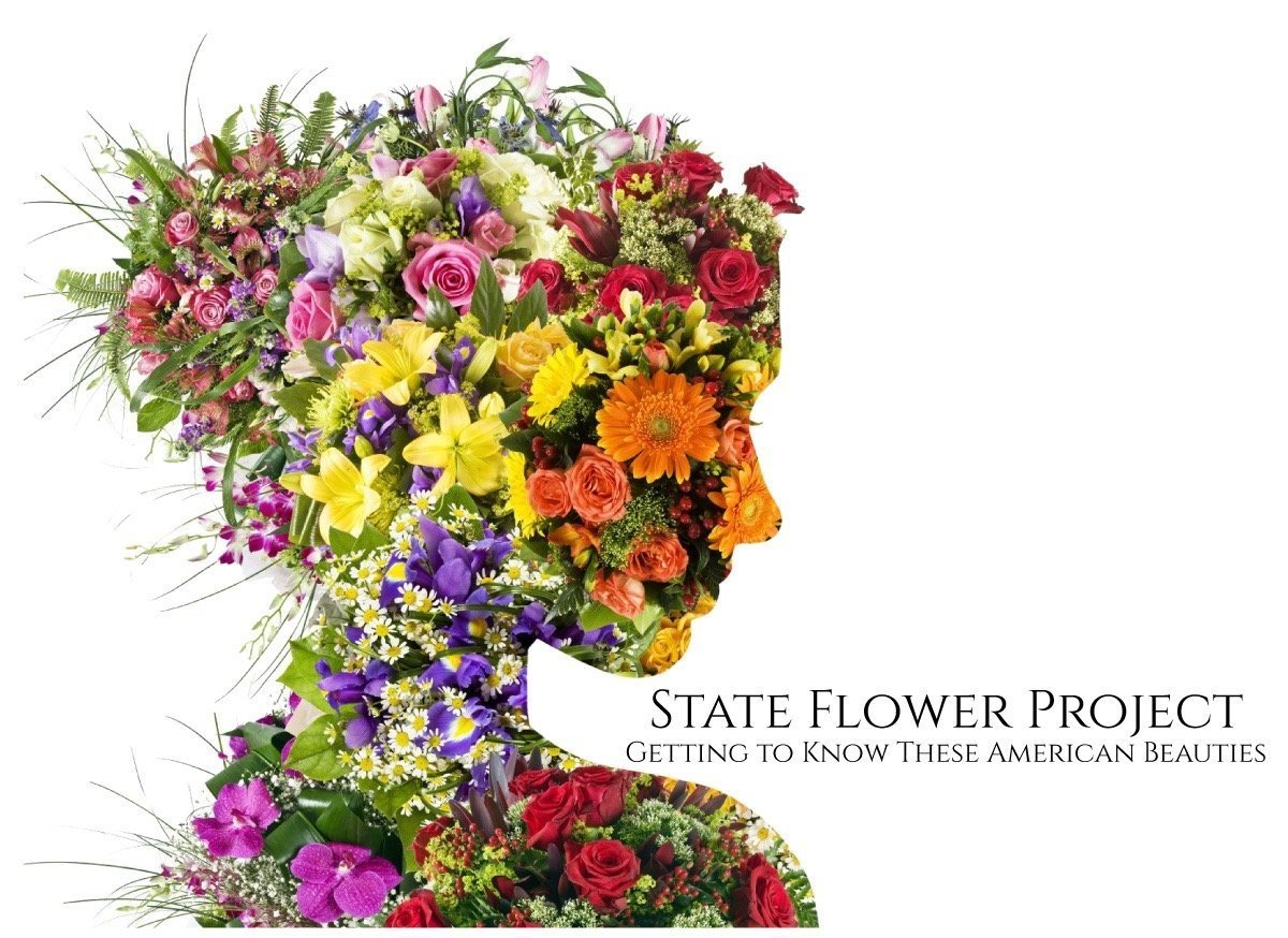 State Flower Project Header