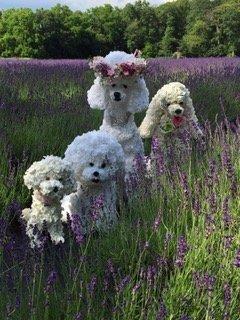 Felicia C. Greenberg Dogs In Field