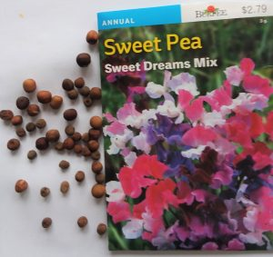 Sweet Pea Seeds