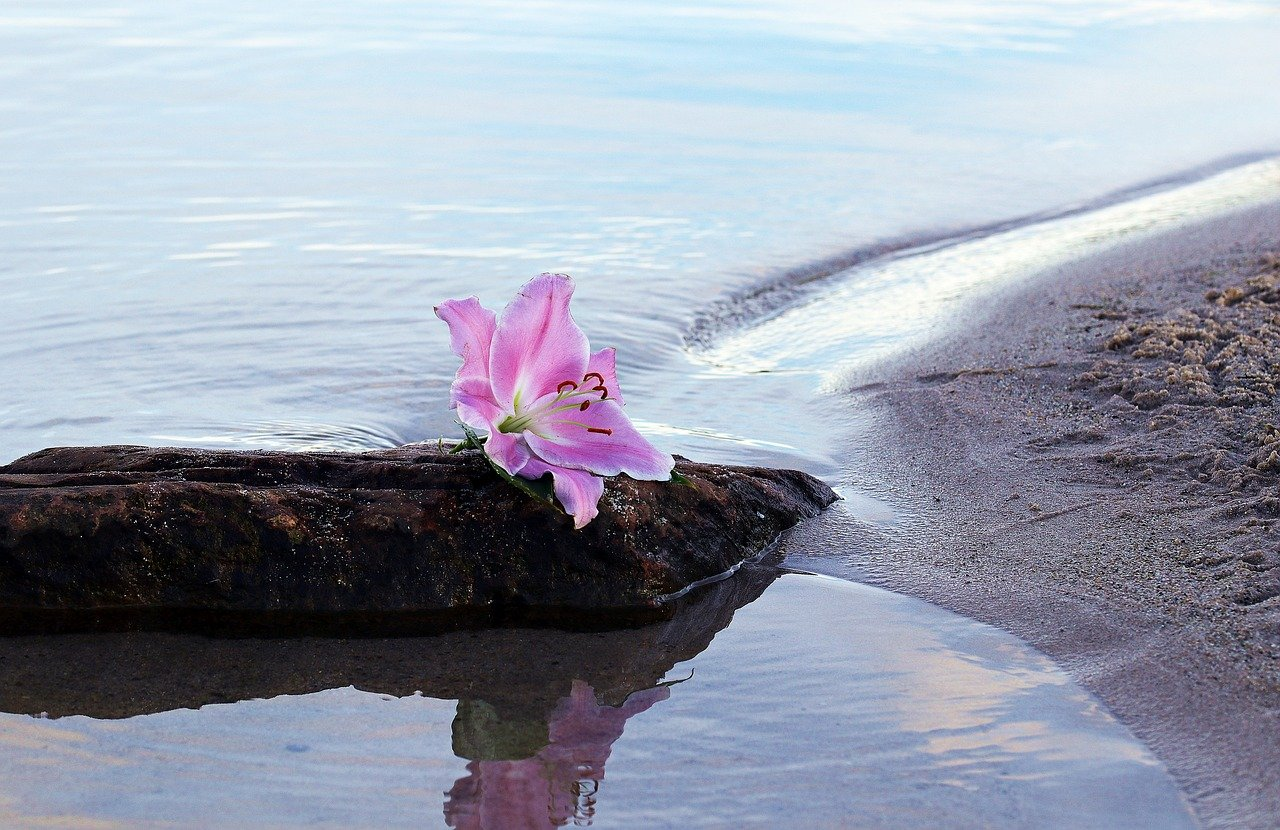 Lily Flower Blossom on Beach