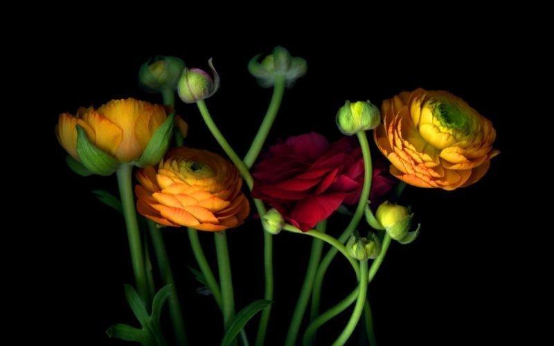 Magda Indigo's Flower Portraits