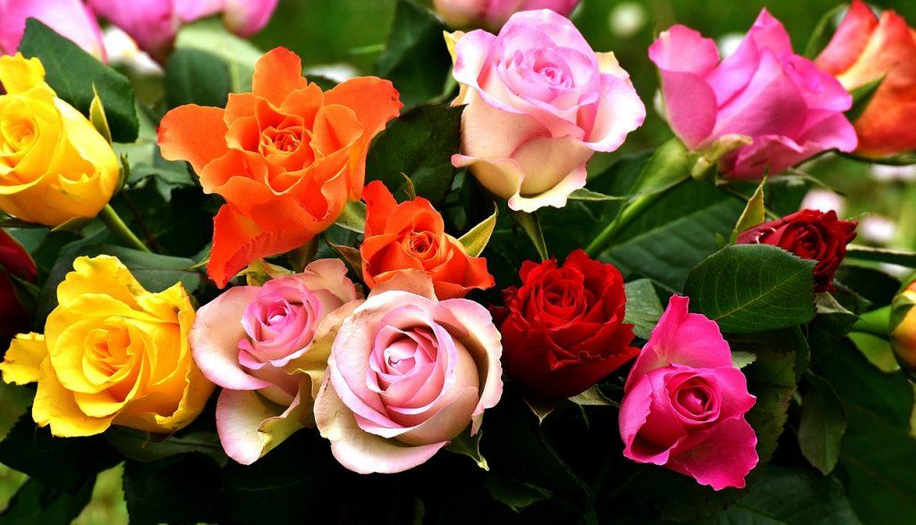 Beautiful Colorful Rose Garden