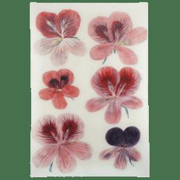 John Derian Six Pelargoniam Decoupage