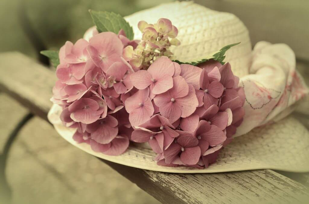 Pink Hydrangea Perfect Flower For Aunts