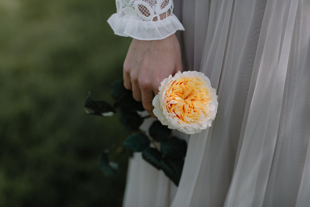 Woman Holding A White Rose