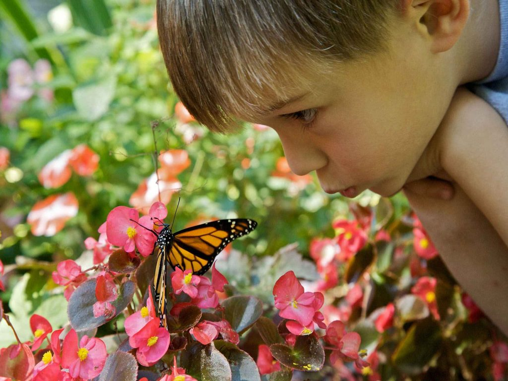Young Boy Butterfly In Garden