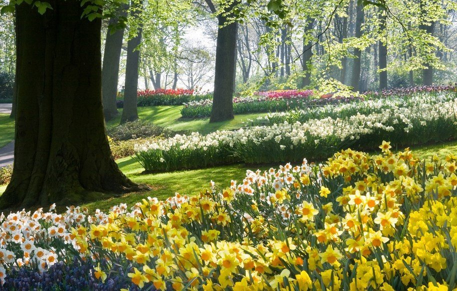 How To Grow Care For Daffodils