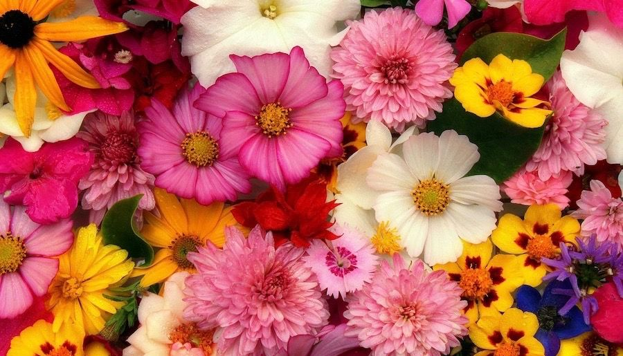 Flower Power Website Submissions