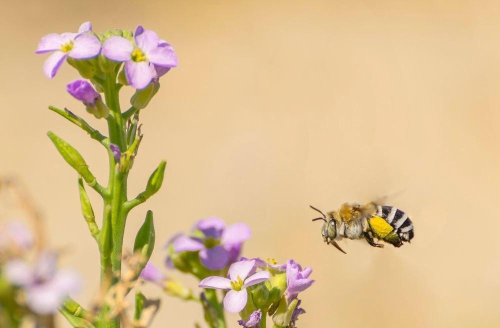 How To Build A Pollinator Garden
