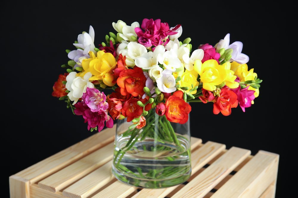 Exotic and Elegant Smelling Freesia Flower