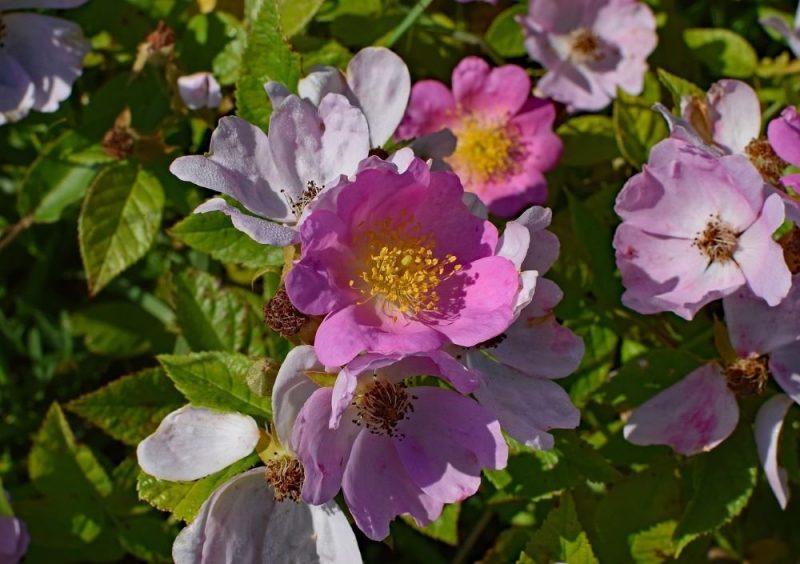 Alexander Hamilton Flower Garden
