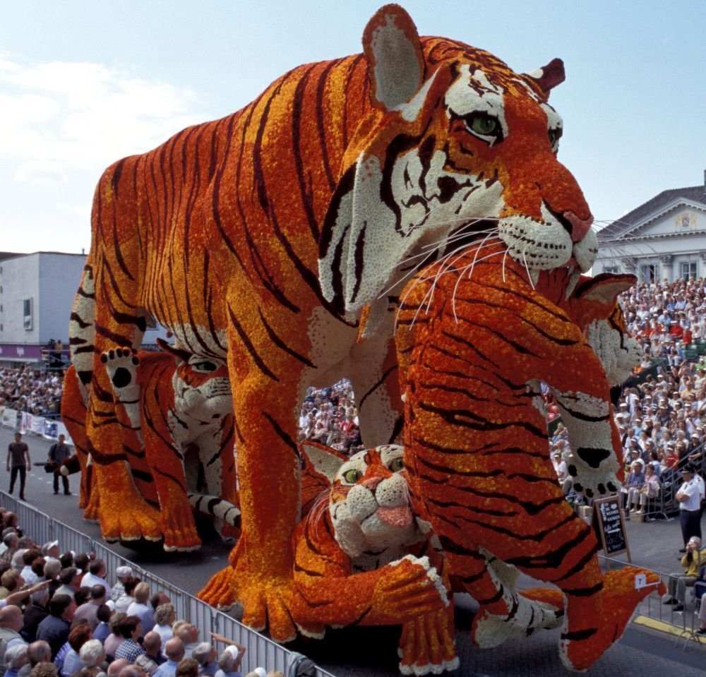 Netherlands Flower Parade Tiger and Cubs
