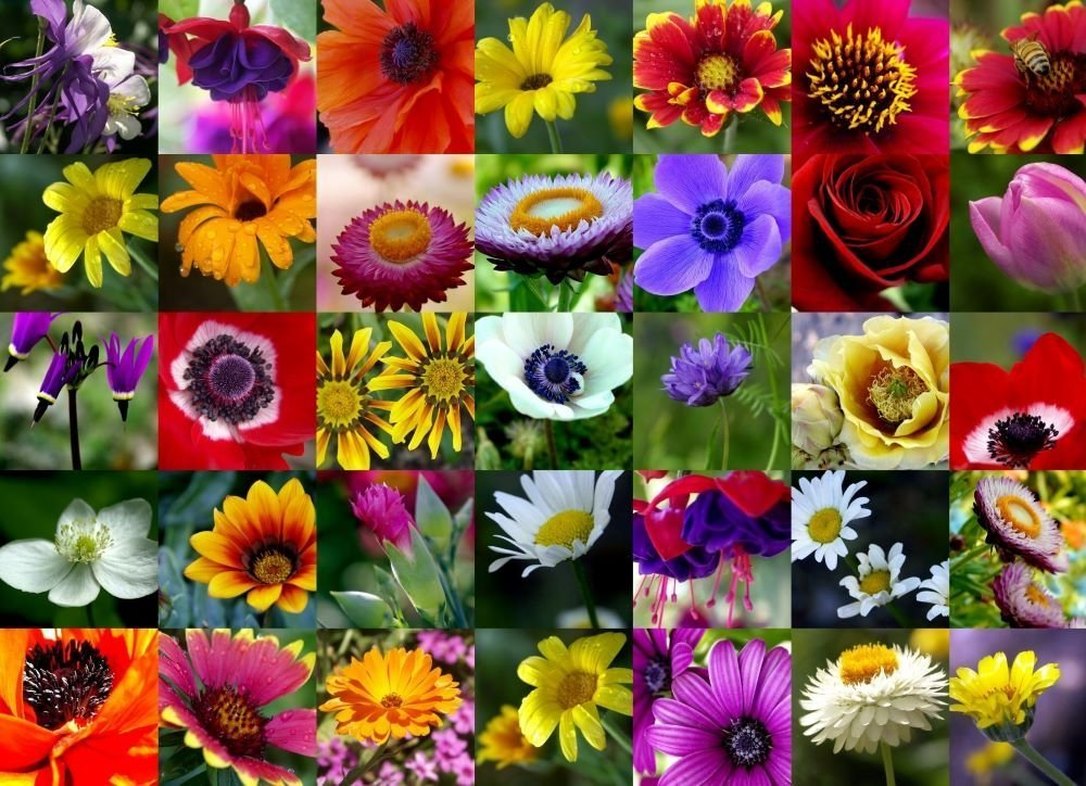 Guide To Origins & Meanings Of Our Favorite Flowers