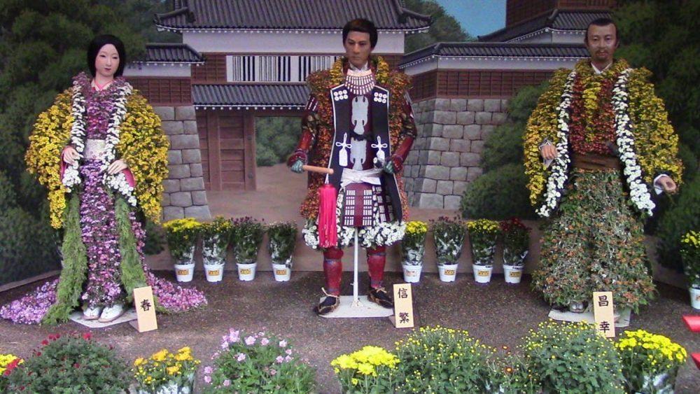 Chrysanthemum dolls