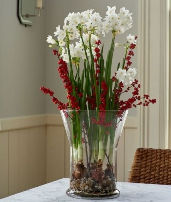 Paperwhites in a vase Holiday planting